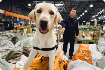 image of sniffer dog