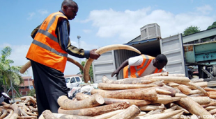 Demand - Ivory confiscation during Operation Cobra